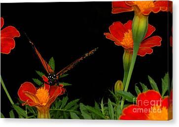 Orange On Orange Canvas Print by Lydia Holly