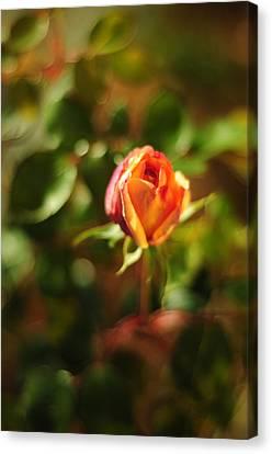 Orange Rosebud Canvas Print by Rebecca Sherman