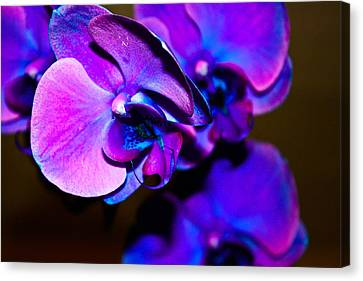 Orchid #2 Canvas Print by David Alexander