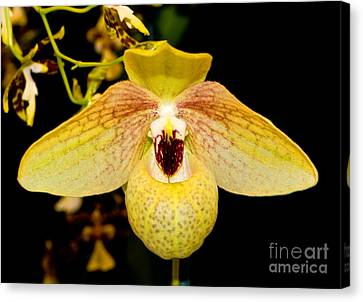 Orchid 23 Canvas Print by Terry Elniski