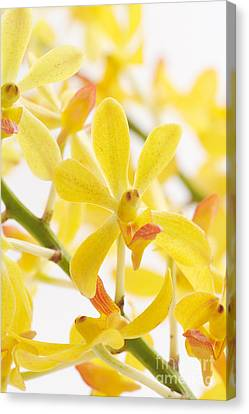 Orchid Bunch Canvas Print by Atiketta Sangasaeng