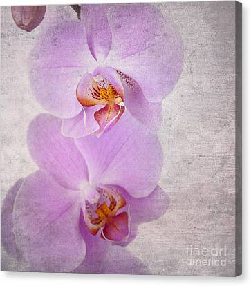 Orchid Canvas Print by Jane Rix