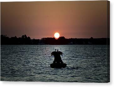 Osprey Sunrise Canvas Print by Bill Cannon