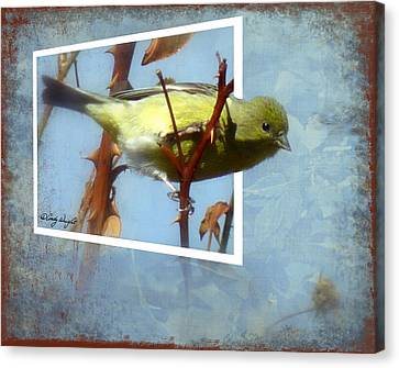 Out Of Bounds Female Goldfinch Canvas Print by Cindy Wright