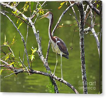 Out On A Limb Canvas Print by Al Powell Photography USA