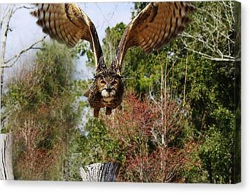 Owl In Flight Canvas Print by Paulette Thomas
