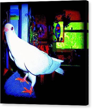 Owl Pigeon Canvas Print by YoMamaBird Rhonda