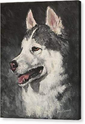 Ozzie Canvas Print by Jack Skinner