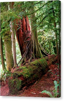 Pacific Rim National Park 9 Canvas Print by Terry Elniski
