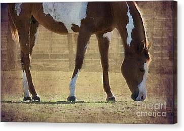 Paint Horse Canvas Print by Betty LaRue