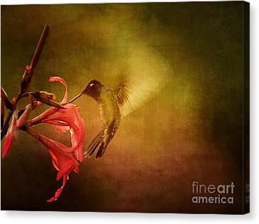 Painterly Hummingbird #2 Canvas Print by Anne Rodkin