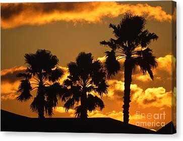 Palm Trees In Sunrise Canvas Print by Susanne Van Hulst