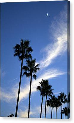 Palm Trees In The Sky Canvas Print by Terry Thomas