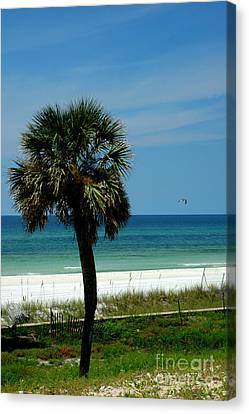 Palmetto And The Beach Canvas Print by Susanne Van Hulst