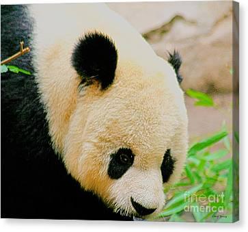 Panda  Canvas Print by Cheryl Young