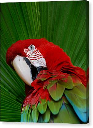 Parrot Head Canvas Print by Skip Willits