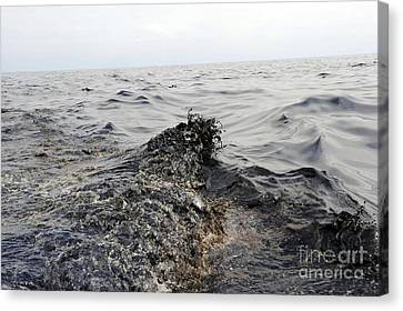 Part Of An Oil Slick In The Gulf Canvas Print by Stocktrek Images