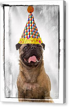 Party Animal Canvas Print by Edward Fielding