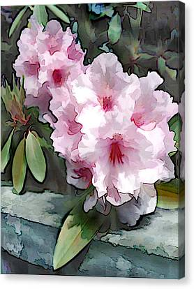 Pastel Pink Rhodendron At Garden Wall Canvas Print by Elaine Plesser