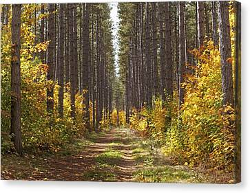 Path Into The Forest In Autumn Sault Canvas Print by Susan Dykstra