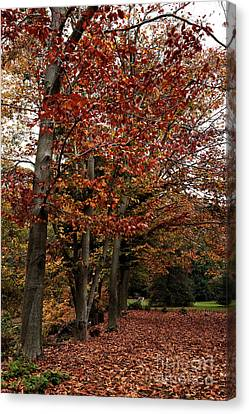 Path Of Leaves Canvas Print by John Rizzuto