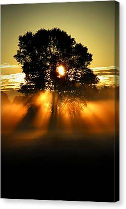 Paved In Gold Canvas Print by John Chivers