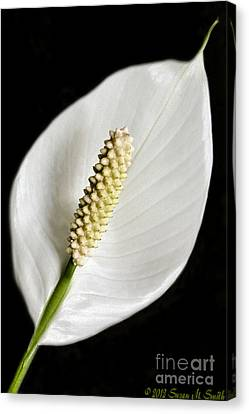 Peaceful Canvas Print by Susan Smith