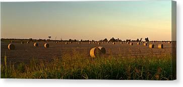 Peanut Field Bales At Dawn 1 Canvas Print by Douglas Barnett