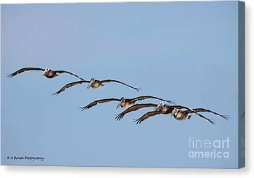 Pelican Crew In Flight Canvas Print by Barbara Bowen