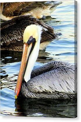 Pelican Pete Canvas Print by Karen Wiles