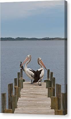 Pelicans On A Timber Landing Pier Mooring Canvas Print by Ulrich Schade
