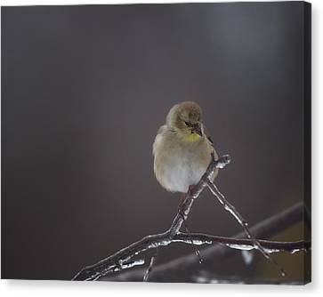 Pensive Canvas Print by Susan Capuano