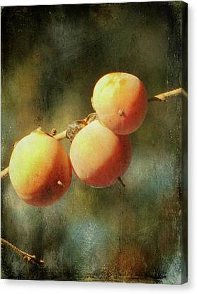 Persimmons Canvas Print by Amy Tyler