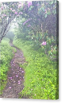 Petaled Path Canvas Print by Rob Travis