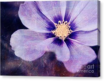 Petaline - 06bt04b Canvas Print by Variance Collections