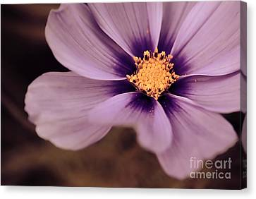 Petaline - P04d Canvas Print by Variance Collections