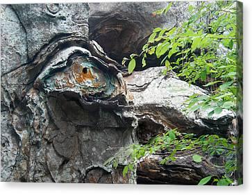 Petrified Prehistoric Monster In Arkansas Canvas Print by Douglas Barnett