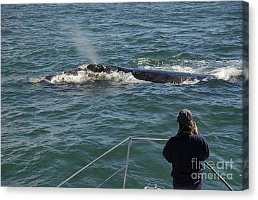 Photographer On Whale Watching Boat Canvas Print by Sami Sarkis