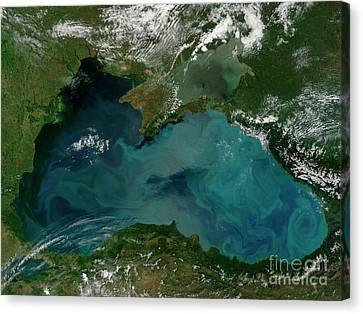 Phytoplankton Bloom In The Black Sea Canvas Print by Stocktrek Images