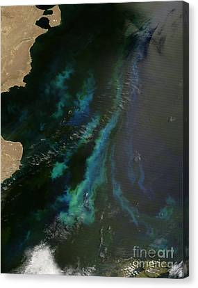 Phytoplankton Off Argentinas Coast Canvas Print by Nasa