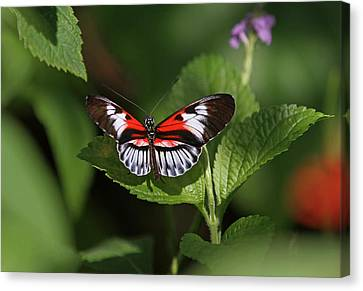 Piano Key Butterfly Canvas Print by Juergen Roth