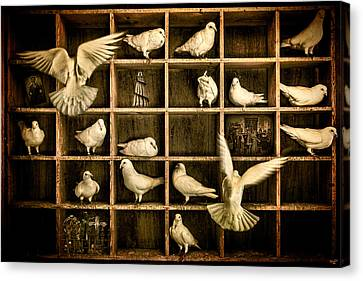 Pigeon Holed Canvas Print by Chris Lord