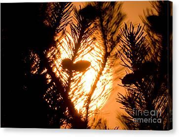 Pine Cone Silohuette Canvas Print by Terry Elniski