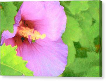 Pink Althea Canvas Print by Wide Awake Arts