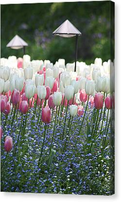 Pink And Blue Canvas Print by Pam Blackstone