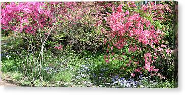 Pink And Blue Canvas Print by Teresa Mucha