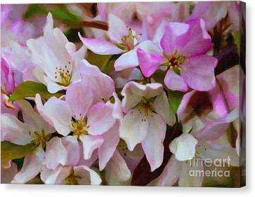 Pink And White Crabapple Blossoms Canvas Print by Donna Munro