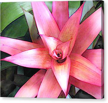 Pink Bromeliad Canvas Print by Elaine Plesser