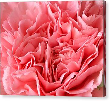Pink Carnation Canvas Print by JD Grimes