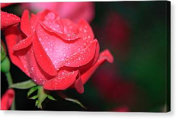 Pink Diamonds Canvas Print by Christopher McPhail